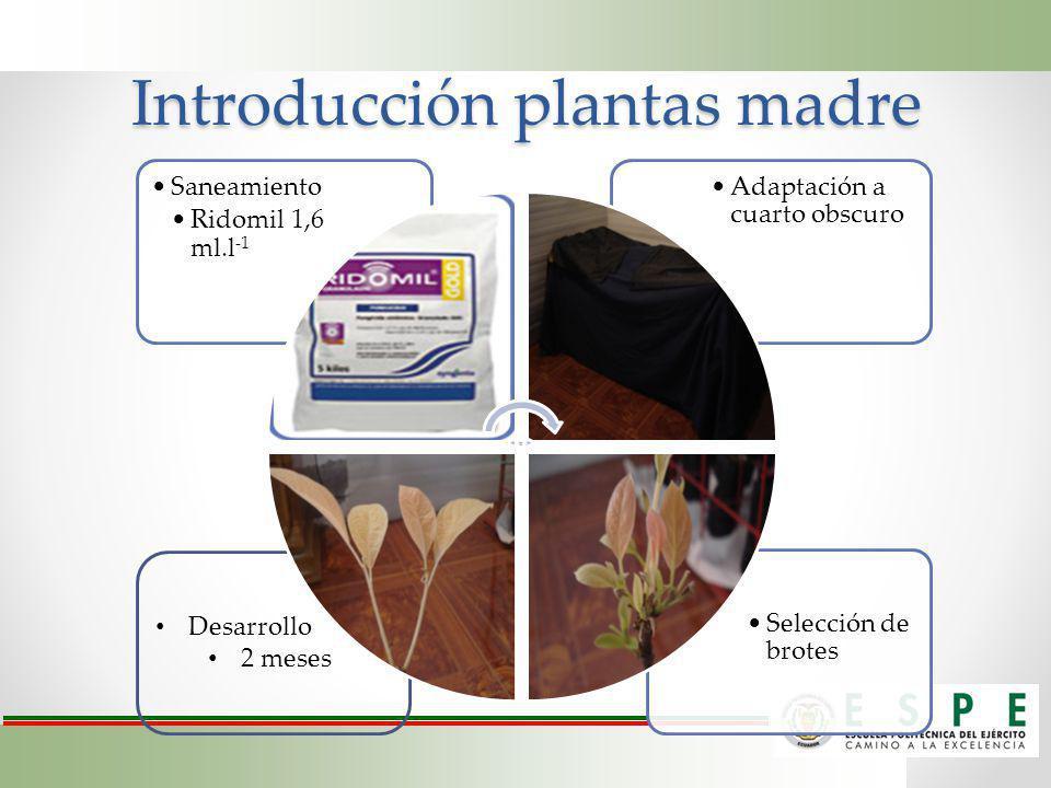 Desarrollo 2 meses Introducción plantas madre Selección de brotes Adaptación a cuarto obscuro Saneamiento Ridomil 1,6 ml.l -1