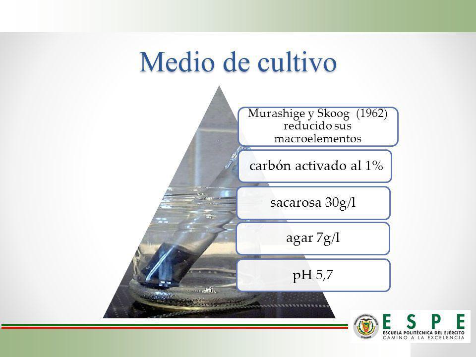 Medio de cultivo Murashige y Skoog (1962) reducido sus macroelementos carbón activado al 1% sacarosa 30g/l agar 7g/l pH 5,7