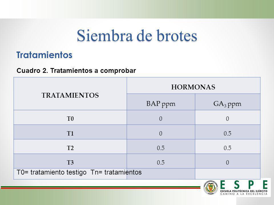 Tratamientos TRATAMIENTOS HORMONAS BAP ppmGA 3 ppm T000 T100.5 T20.5 T30.50 Cuadro 2. Tratamientos a comprobar T0= tratamiento testigo Tn= tratamiento