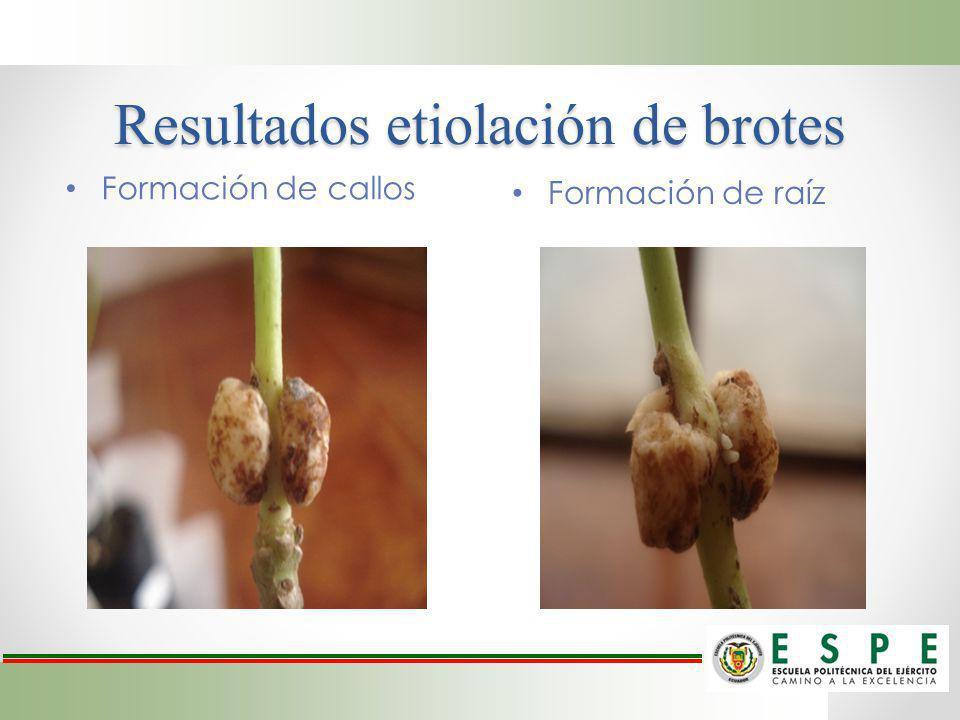 Resultados etiolación de brotes Formación de raíz Formación de callos