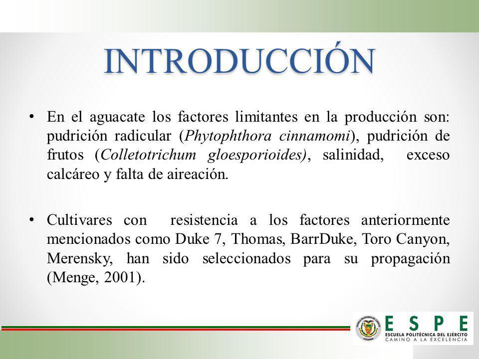 INTRODUCCIÓN En el aguacate los factores limitantes en la producción son: pudrición radicular (Phytophthora cinnamomi), pudrición de frutos (Colletotr