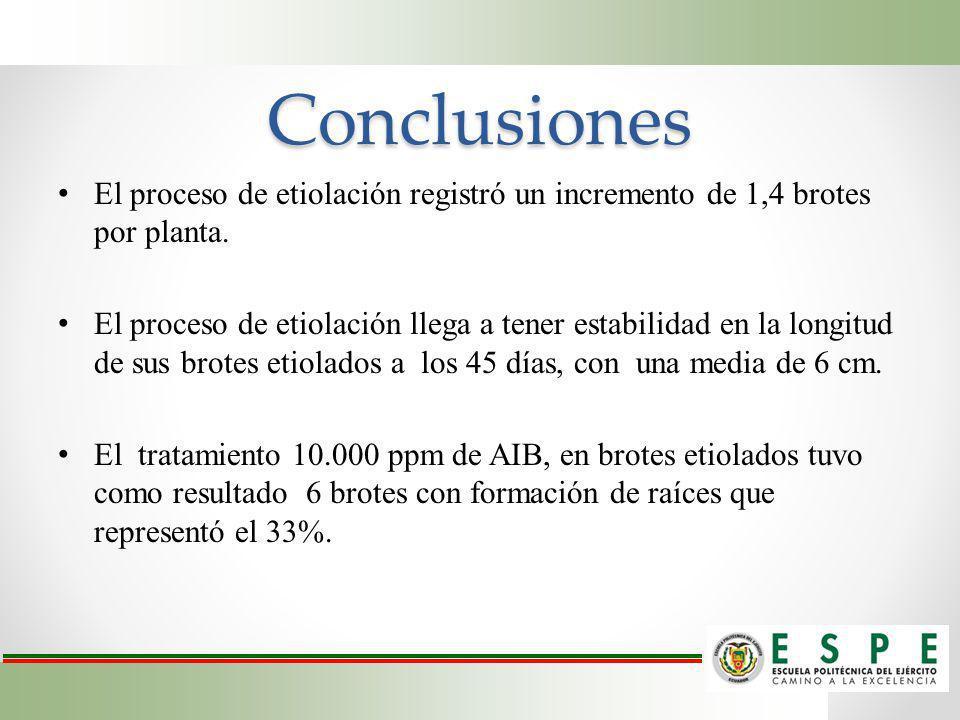 Conclusiones El proceso de etiolación registró un incremento de 1,4 brotes por planta. El proceso de etiolación llega a tener estabilidad en la longit