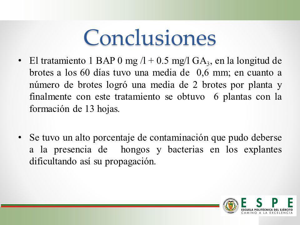 Conclusiones El tratamiento 1 BAP 0 mg /l + 0.5 mg/l GA 3, en la longitud de brotes a los 60 días tuvo una media de 0,6 mm; en cuanto a número de brot