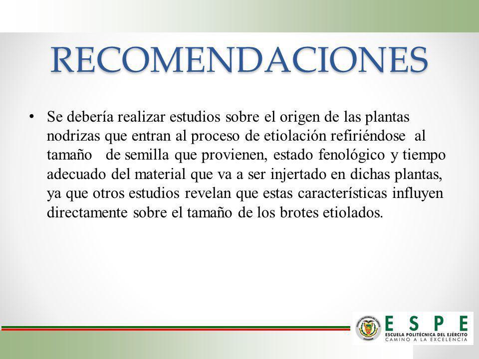 RECOMENDACIONES Se debería realizar estudios sobre el origen de las plantas nodrizas que entran al proceso de etiolación refiriéndose al tamaño de sem