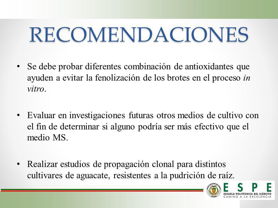 RECOMENDACIONES Se debe probar diferentes combinación de antioxidantes que ayuden a evitar la fenolización de los brotes en el proceso in vitro. Evalu