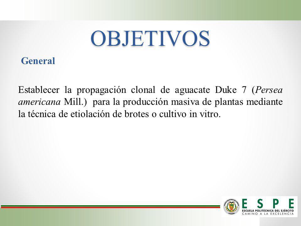 OBJETIVOS General Establecer la propagación clonal de aguacate Duke 7 (Persea americana Mill.) para la producción masiva de plantas mediante la técnic