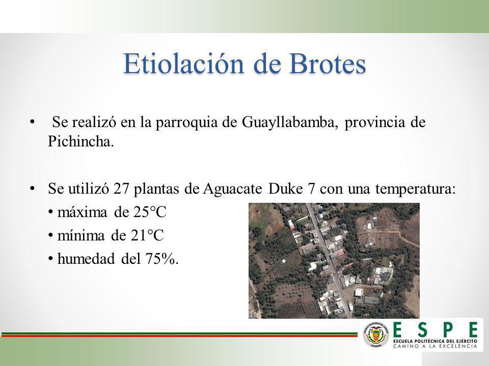 Etiolación de Brotes Se realizó en la parroquia de Guayllabamba, provincia de Pichincha. Se utilizó 27 plantas de Aguacate Duke 7 con una temperatura: