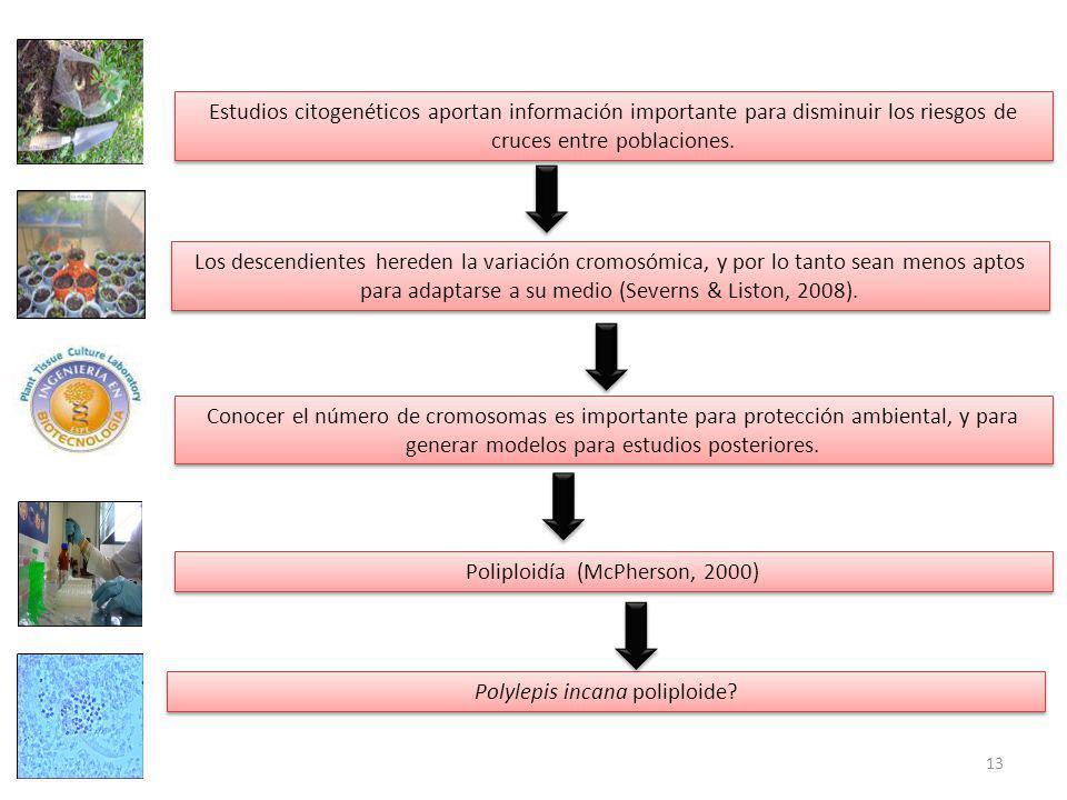 Estudios citogenéticos aportan información importante para disminuir los riesgos de cruces entre poblaciones.