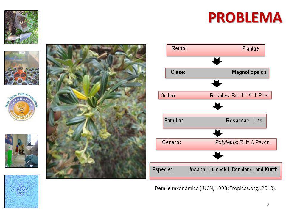Detalle taxonómico (IUCN, 1998; Tropicos.org., 2013). 3 PROBLEMA