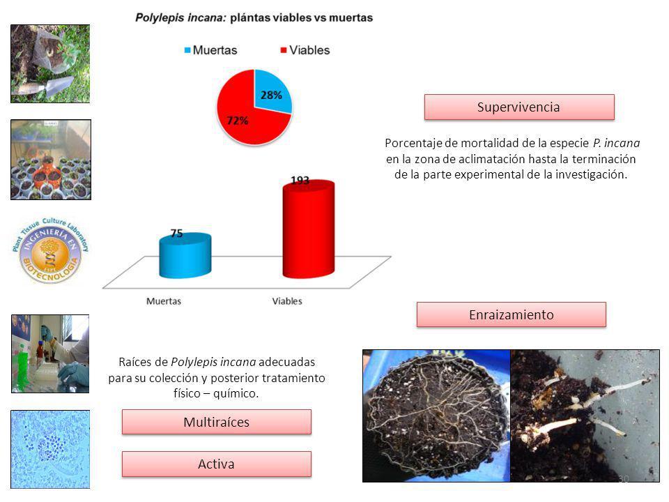 Porcentaje de mortalidad de la especie P.