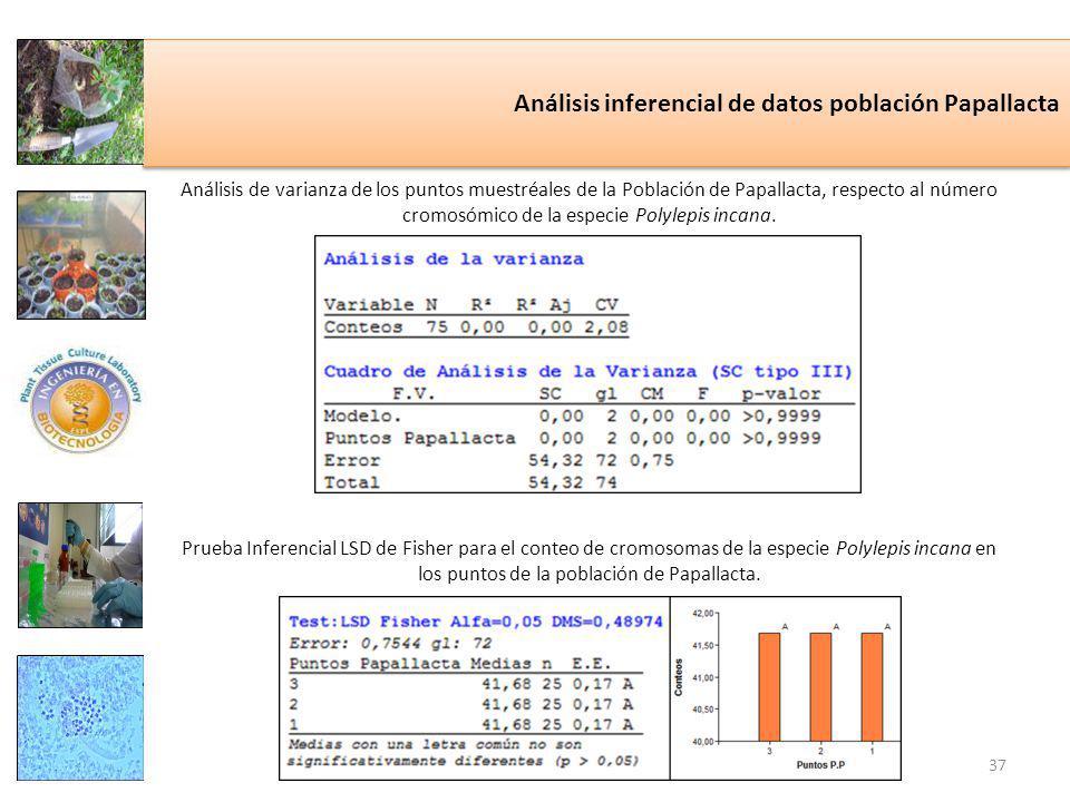 Análisis inferencial de datos población Papallacta Análisis de varianza de los puntos muestréales de la Población de Papallacta, respecto al número cromosómico de la especie Polylepis incana.