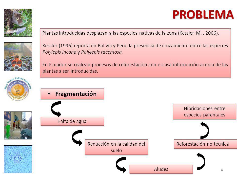 PROBLEMA Plantas introducidas desplazan a las especies nativas de la zona (Kessler M., 2006).