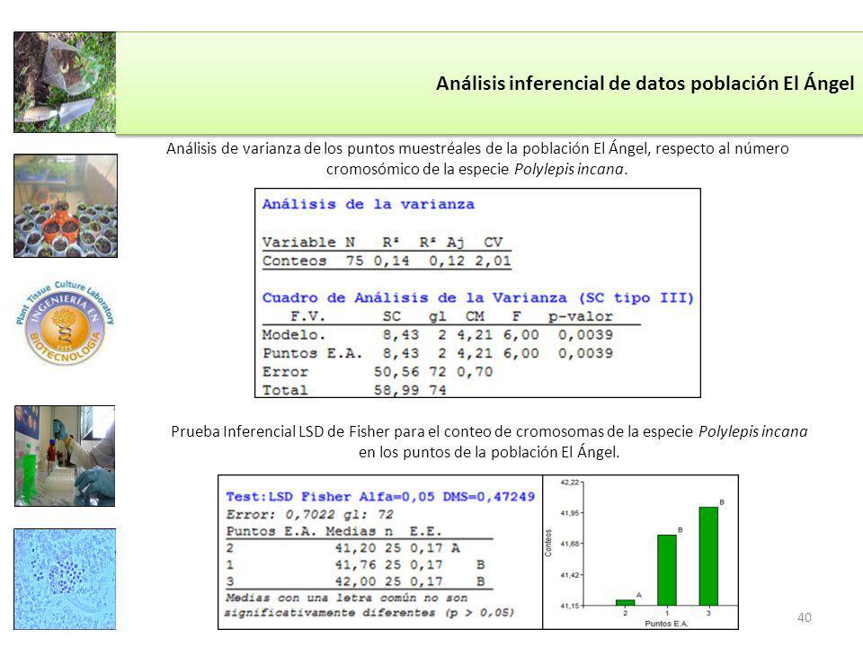 Análisis inferencial de datos población El Ángel Análisis de varianza de los puntos muestréales de la población El Ángel, respecto al número cromosómico de la especie Polylepis incana.
