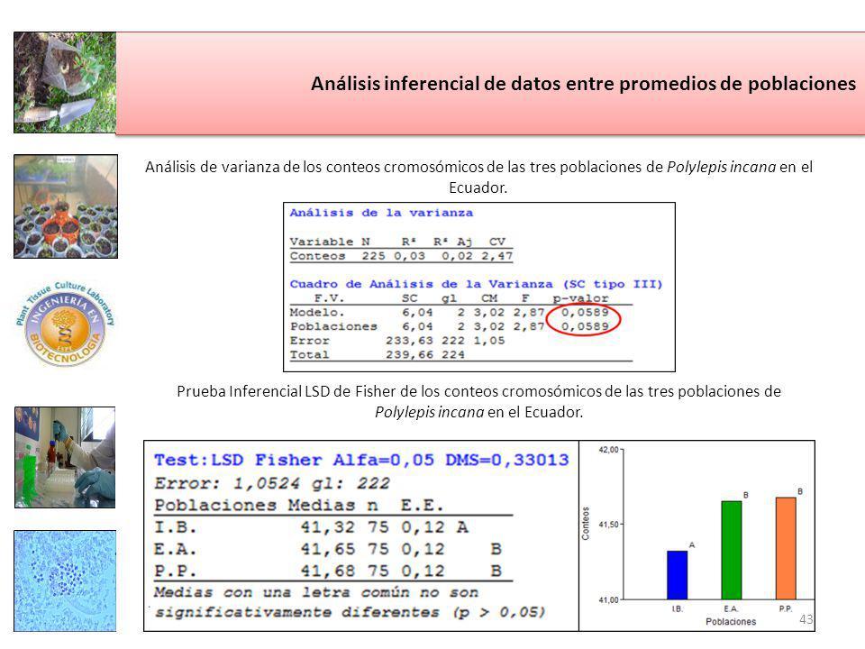 Análisis inferencial de datos entre promedios de poblaciones Análisis de varianza de los conteos cromosómicos de las tres poblaciones de Polylepis incana en el Ecuador.