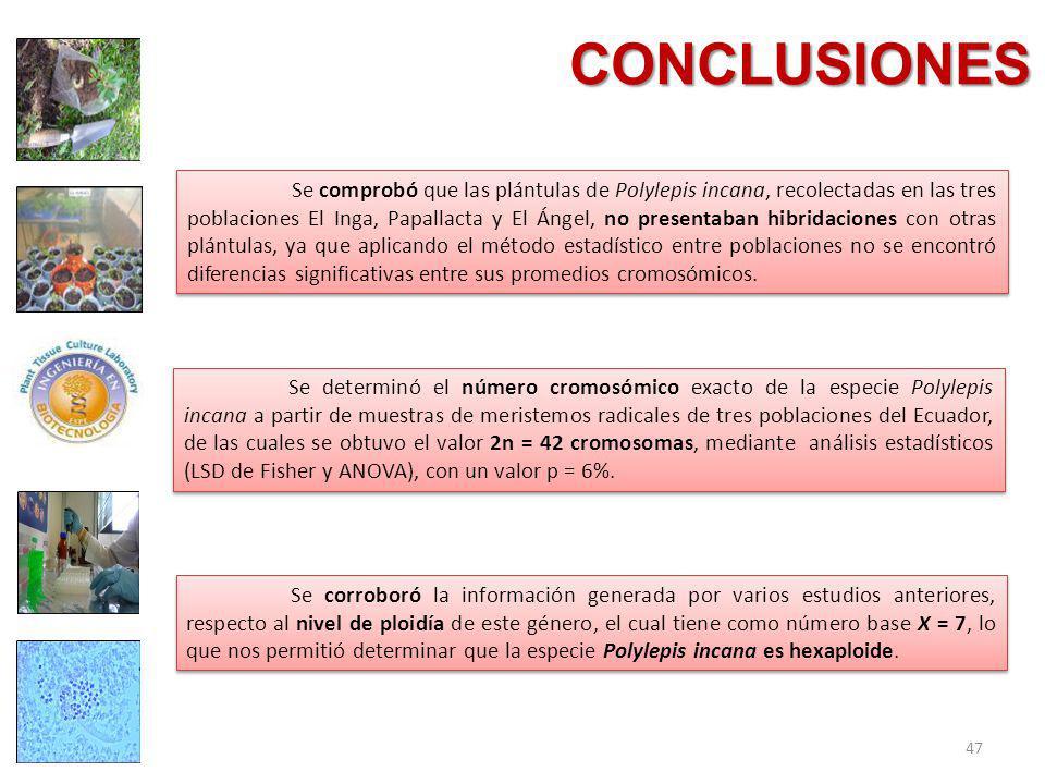 CONCLUSIONES Se determinó el número cromosómico exacto de la especie Polylepis incana a partir de muestras de meristemos radicales de tres poblaciones del Ecuador, de las cuales se obtuvo el valor 2n = 42 cromosomas, mediante análisis estadísticos (LSD de Fisher y ANOVA), con un valor p = 6%.