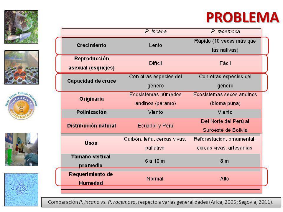 PROBLEMA Comparación P.incana vs. P.