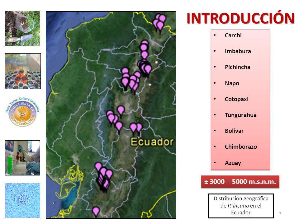 Distribución geográfica de P.