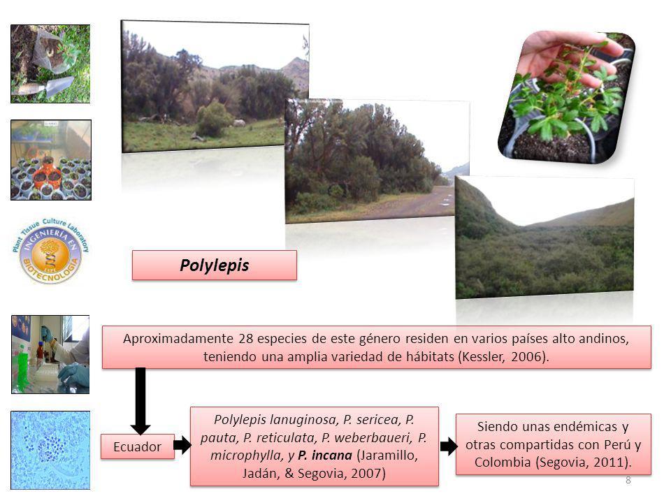 Aproximadamente 28 especies de este género residen en varios países alto andinos, teniendo una amplia variedad de hábitats (Kessler, 2006).