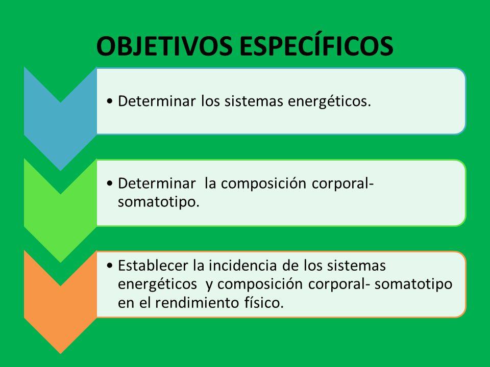 OBJETIVOS ESPECÍFICOS Determinar los sistemas energéticos. Determinar la composición corporal- somatotipo. Establecer la incidencia de los sistemas en