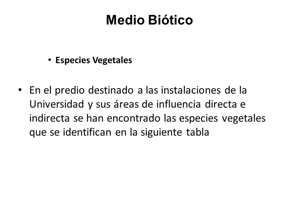 Especies Vegetales En el predio destinado a las instalaciones de la Universidad y sus áreas de influencia directa e indirecta se han encontrado las es