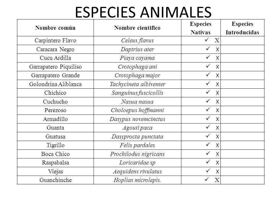 ESPECIES ANIMALES Nombre comúnNombre cientifico Especies Nativas Especies Introducidas Carpintero FlavoCeleus flavus X Caracara NegroDaptrius ater X C