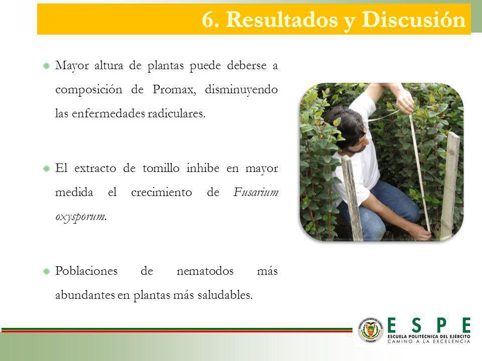 Mayor altura de plantas puede deberse a composición de Promax, disminuyendo las enfermedades radiculares.