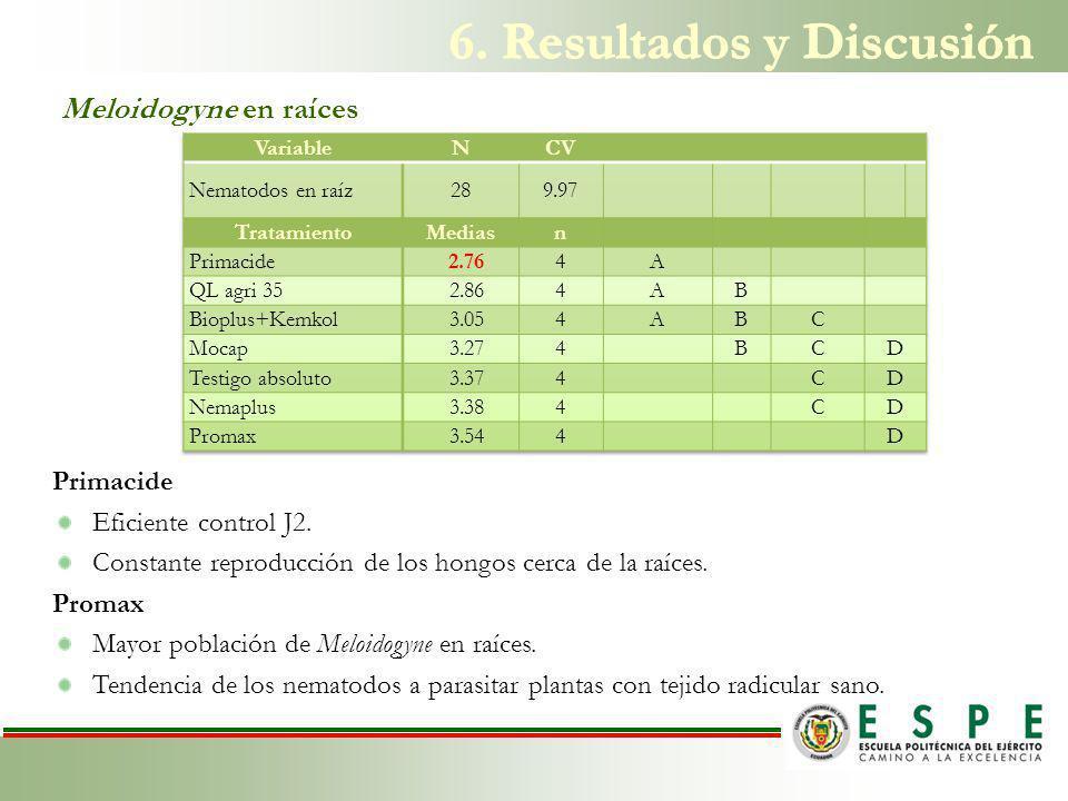 Meloidogyne en raíces Primacide Eficiente control J2.