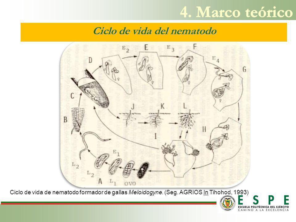 Ciclo de vida del nematodo Ciclo de vida de nematodo formador de gallas Meloidogyne.