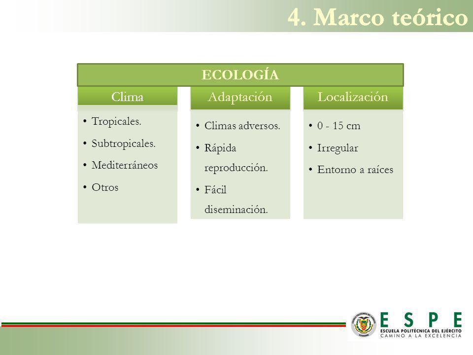 Primarios Nódulos Lesiones Ramificación Secundarios Poco crecimiento Amarillamiento Marchitamiento Baja calidad de producción SÍNTOMAS