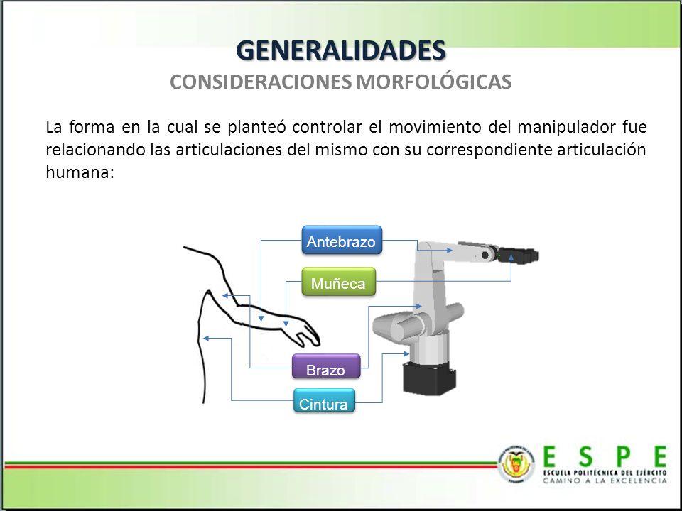 GENERALIDADES GENERALIDADES CONSIDERACIONES MORFOLÓGICAS Cintura Brazo Antebrazo Muñeca La forma en la cual se planteó controlar el movimiento del man