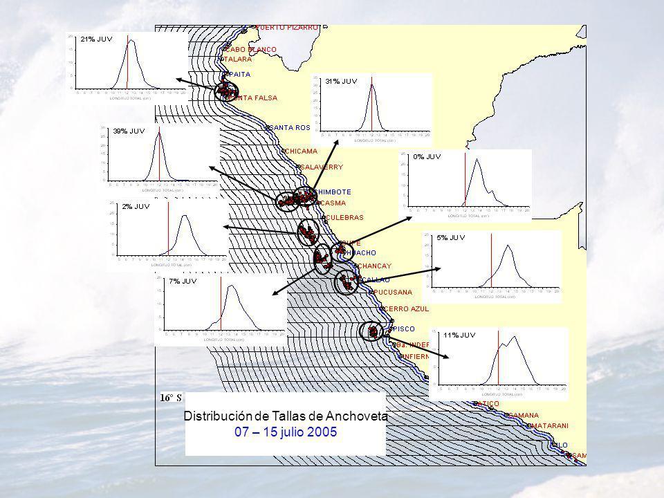 Distribución de Tallas de Anchoveta 07 – 15 julio 2005
