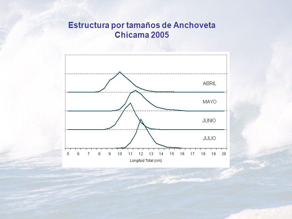 Estructura por tamaños de Anchoveta Chicama 2005