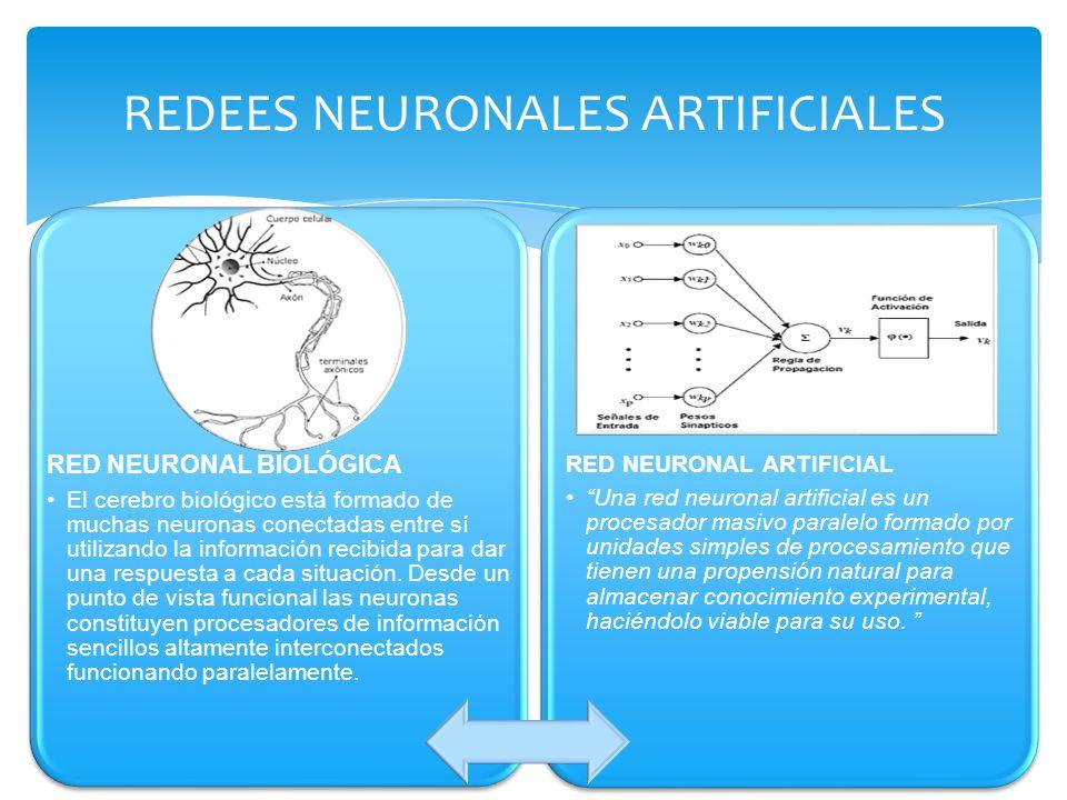 REDEES NEURONALES ARTIFICIALES RED NEURONAL BIOLÓGICA El cerebro biológico está formado de muchas neuronas conectadas entre sí utilizando la informaci