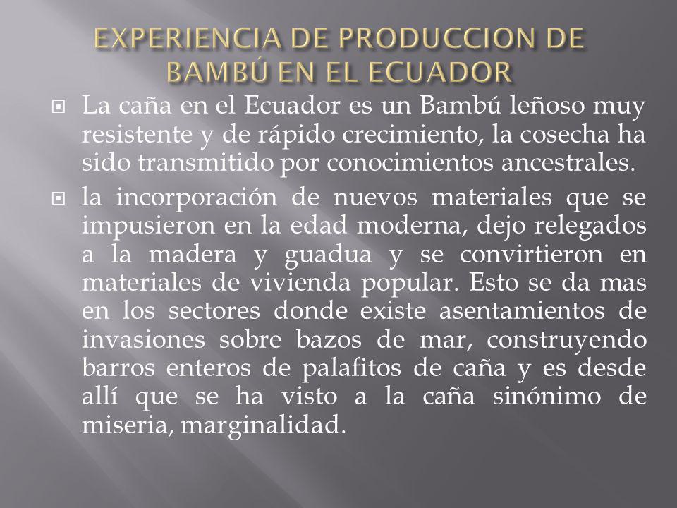 CAPITULO IV PROCESO DE INDUSTRIALIZACION DE LA GUADUA