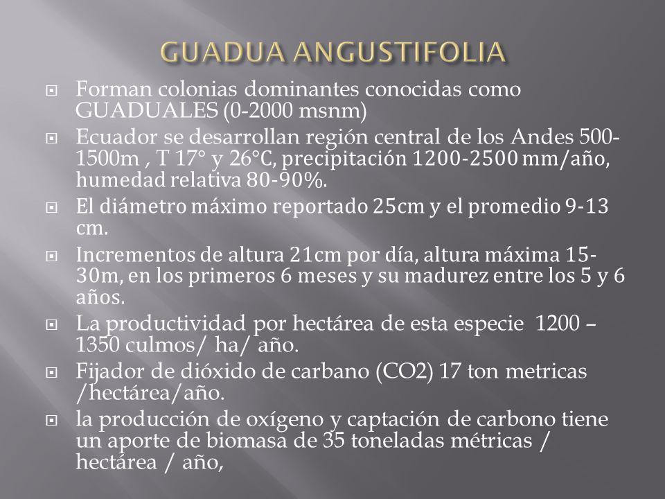 LA HORA DEL CORTE (04:00 – 06:00)CORTE EN CUARTO MENGUANTE MAREA BAJA ESTACION SECA