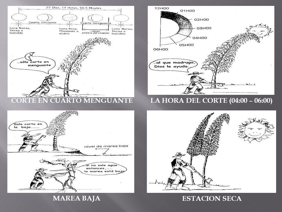 CAPITULO II PROPIEDADES FISICAS, MECANICAS Y ESFUERZOS ADMISIBLES