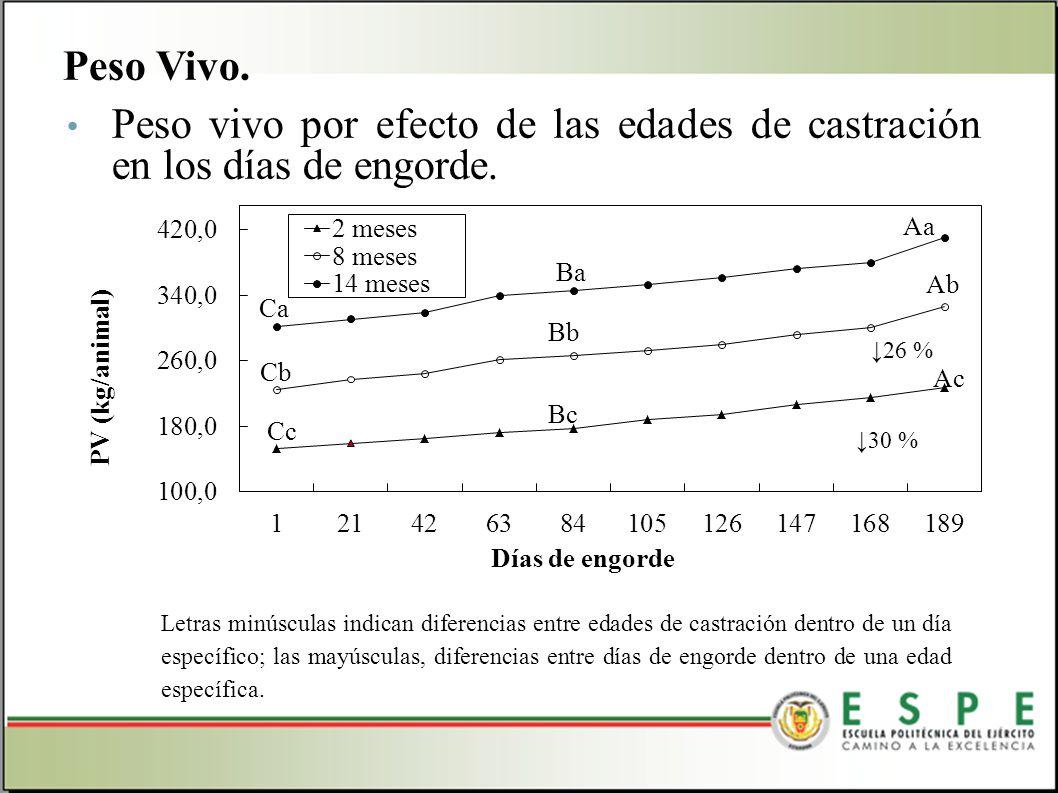 Peso vivo por efecto de las edades de castración en los días de engorde. Peso Vivo. Letras minúsculas indican diferencias entre edades de castración d