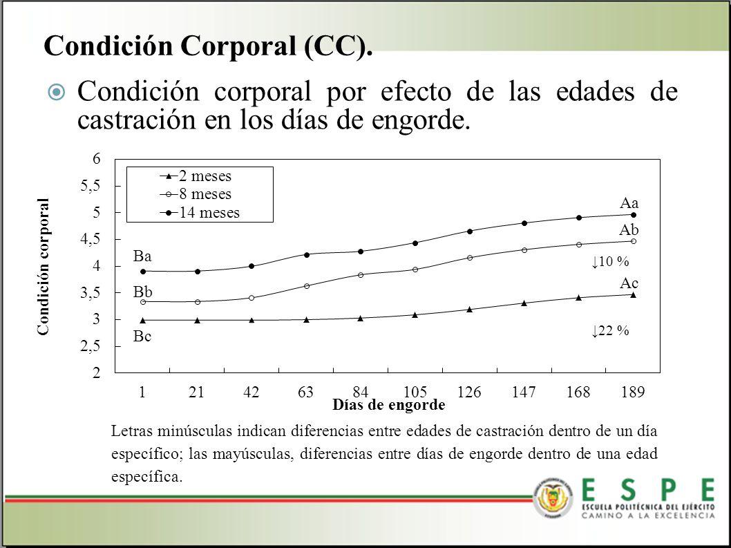 Condición corporal por efecto de las edades de castración en los días de engorde. Condición Corporal (CC). Letras minúsculas indican diferencias entre