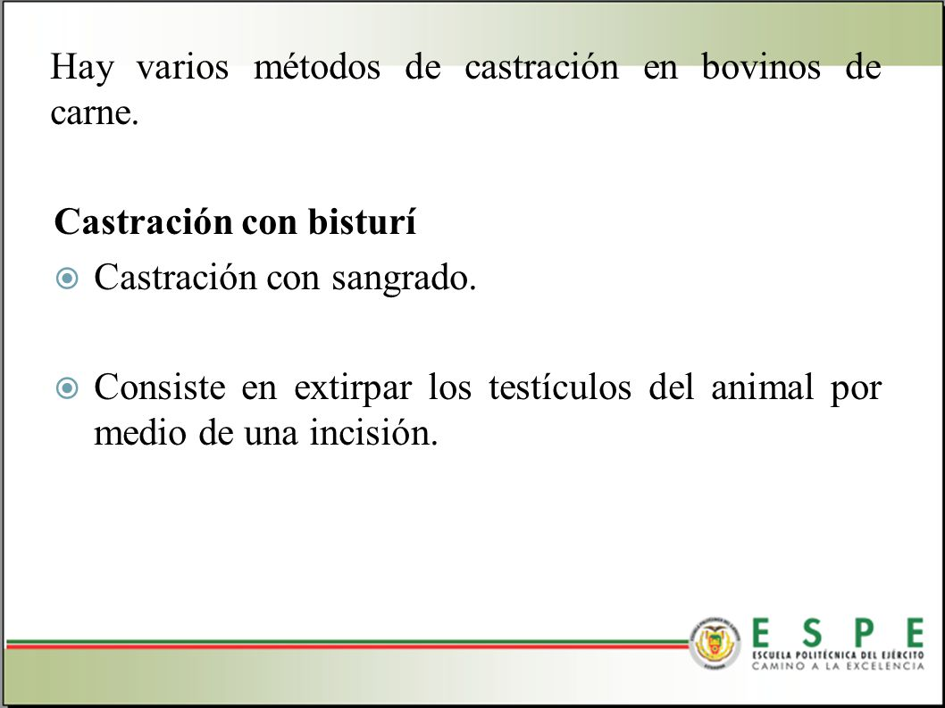 Hay varios métodos de castración en bovinos de carne. Castración con bisturí Castración con sangrado. Consiste en extirpar los testículos del animal p