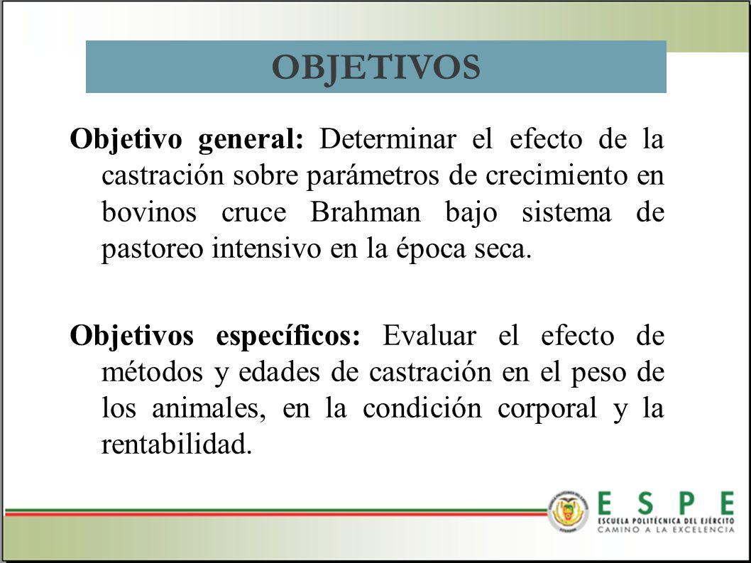 Objetivo general: Determinar el efecto de la castración sobre parámetros de crecimiento en bovinos cruce Brahman bajo sistema de pastoreo intensivo en