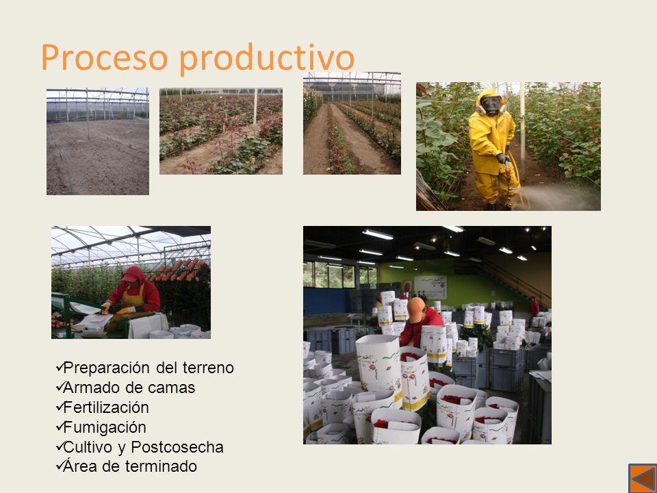 Proceso productivo Preparación del terreno Armado de camas Fertilización Fumigación Cultivo y Postcosecha Área de terminado