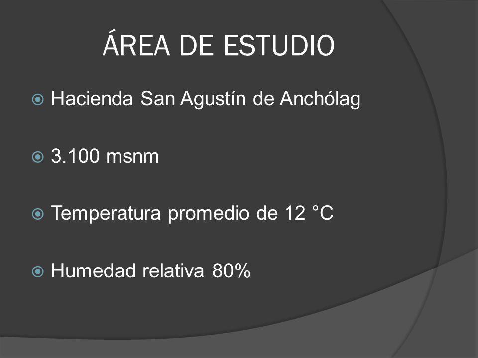 ÁREA DE ESTUDIO Hacienda San Agustín de Anchólag 3.100 msnm Temperatura promedio de 12 °C Humedad relativa 80%