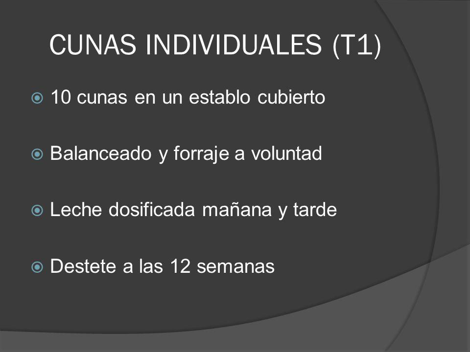 CUNAS INDIVIDUALES (T1) 10 cunas en un establo cubierto Balanceado y forraje a voluntad Leche dosificada mañana y tarde Destete a las 12 semanas