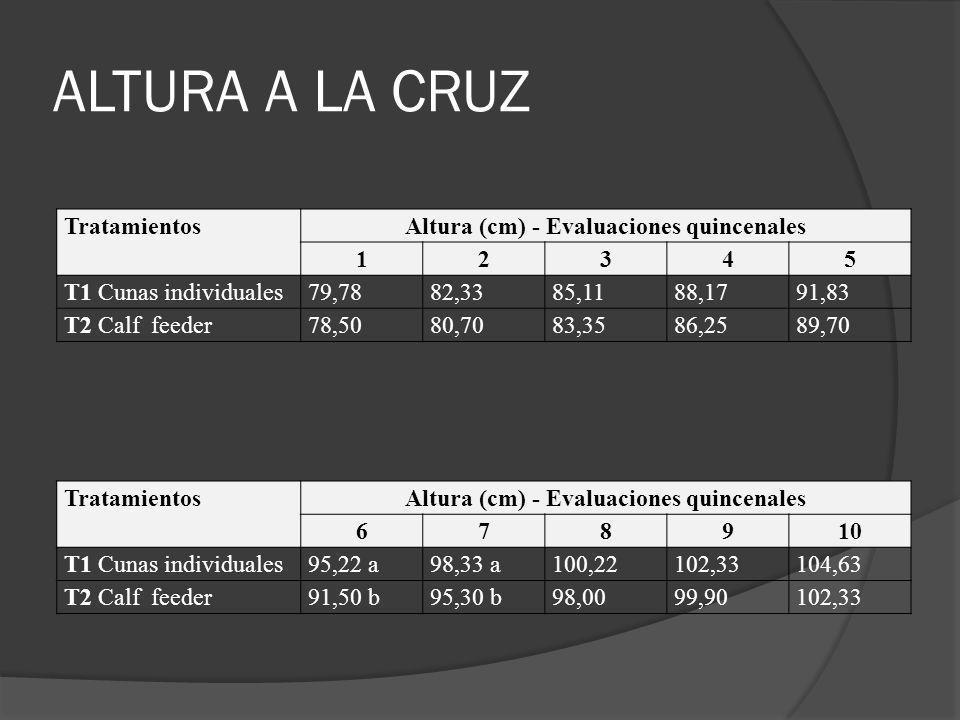 ALTURA A LA CRUZ TratamientosAltura (cm) - Evaluaciones quincenales 12345 T1 Cunas individuales79,7882,3385,1188,1791,83 T2 Calf feeder78,5080,7083,35