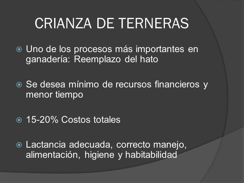 CRIANZA DE TERNERAS Uno de los procesos más importantes en ganadería: Reemplazo del hato Se desea mínimo de recursos financieros y menor tiempo 15-20%
