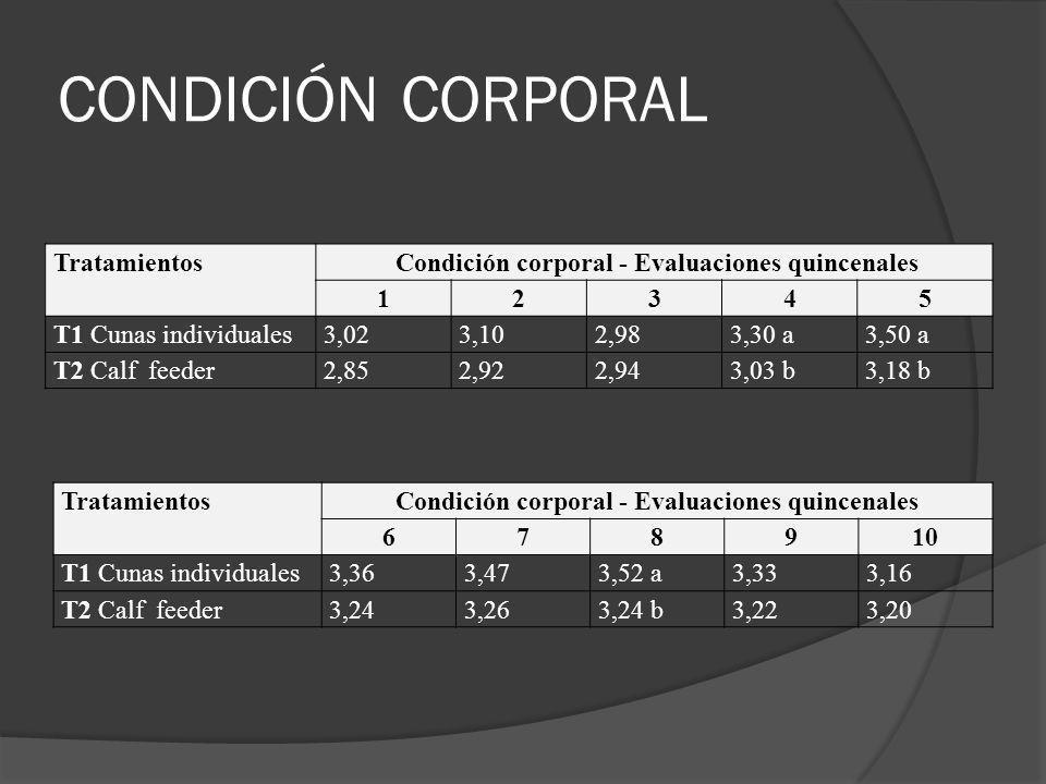 CONDICIÓN CORPORAL Tratamientos Condición corporal - Evaluaciones quincenales 12345 T1 Cunas individuales3,023,102,983,30 a3,50 a T2 Calf feeder2,852,