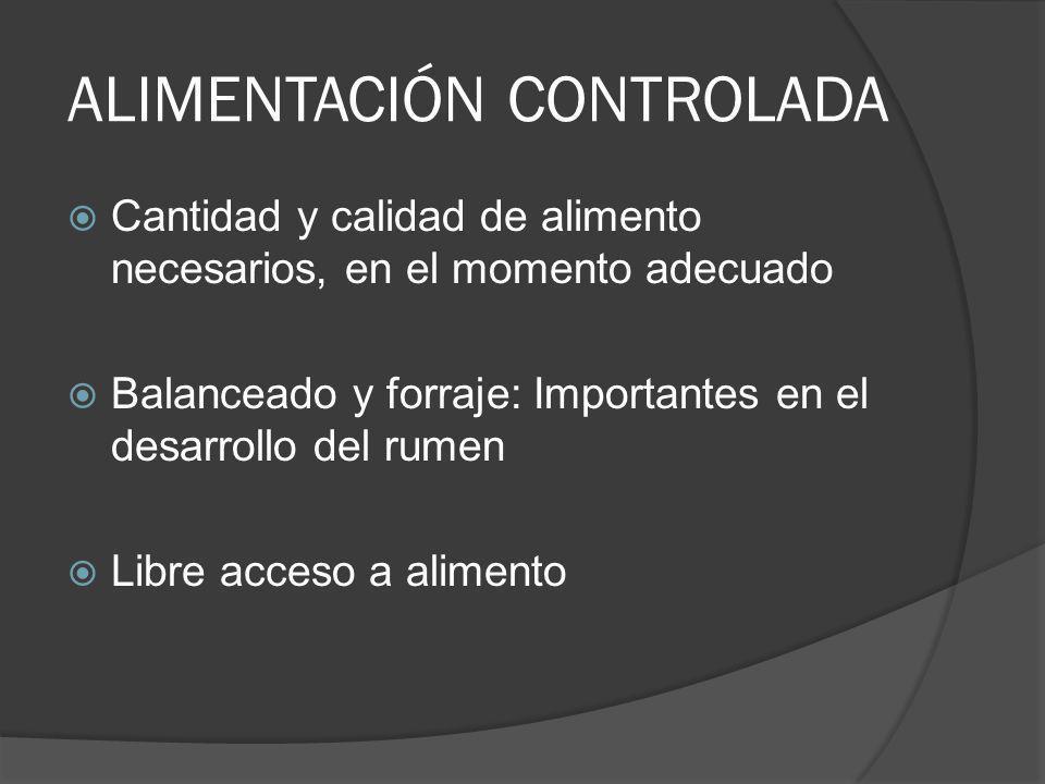 ALIMENTACIÓN CONTROLADA Cantidad y calidad de alimento necesarios, en el momento adecuado Balanceado y forraje: Importantes en el desarrollo del rumen