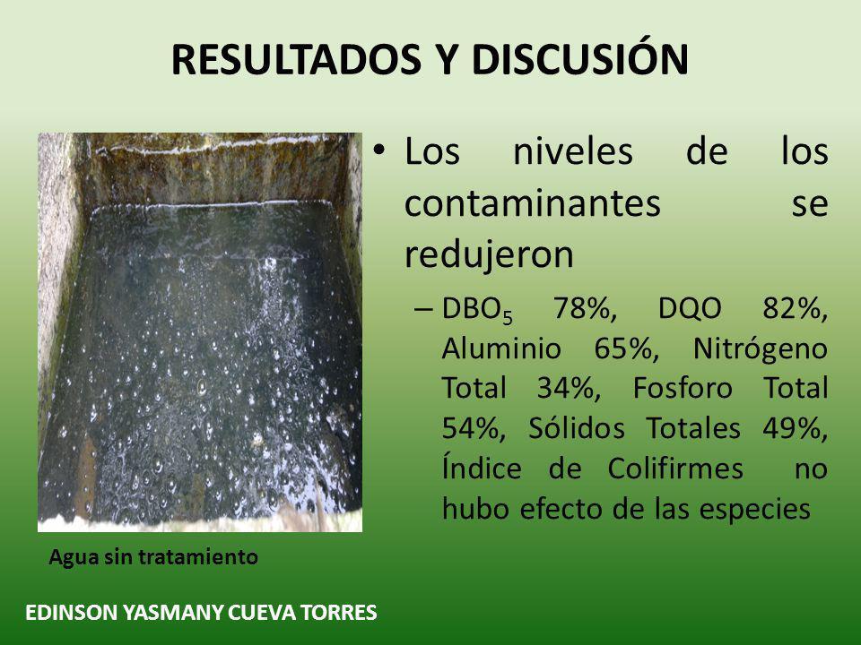 EDINSON YASMANY CUEVA TORRES RESULTADOS Y DISCUSIÓN Los niveles de los contaminantes se redujeron – DBO 5 78%, DQO 82%, Aluminio 65%, Nitrógeno Total 34%, Fosforo Total 54%, Sólidos Totales 49%, Índice de Colifirmes no hubo efecto de las especies Agua sin tratamiento