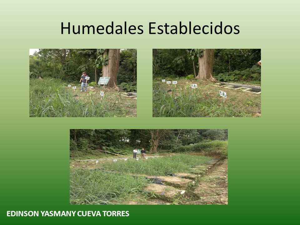 Humedales Establecidos EDINSON YASMANY CUEVA TORRES