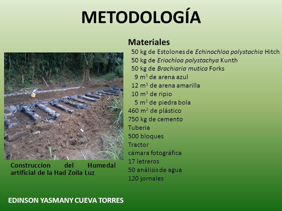 Materiales 50 kg de Estolones de Echinochloa polystachia Hitch 50 kg de Eriochloa polystachya Kunth 50 kg de Brachiaria mutica Forks 9 m 3 de arena az